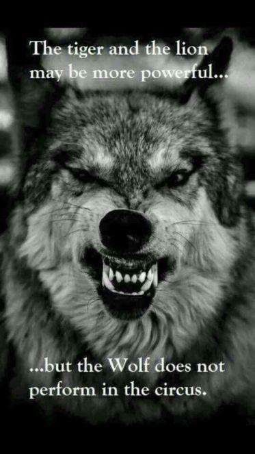 wolf circus
